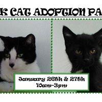 Black Cat Adoption Party