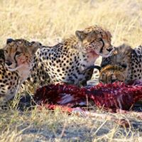 Join 4-days Tanzania budget Camping Safari  800 pp
