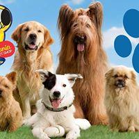 2 Pet Passeio MA-LU Mania Pet Shop