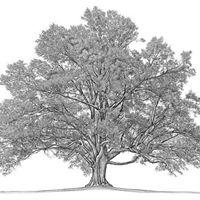 Family Tree Healing Seminar with Maria Moran MA IAHIP