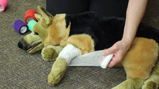 Pet First Aid course at St. John Ambulance Kitchener-Waterloo