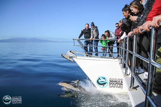 Auckland Whale and Dolphin Safari Fundraising Trip