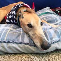 Meet &amp Greet Pet Supplies Plus Youngstown