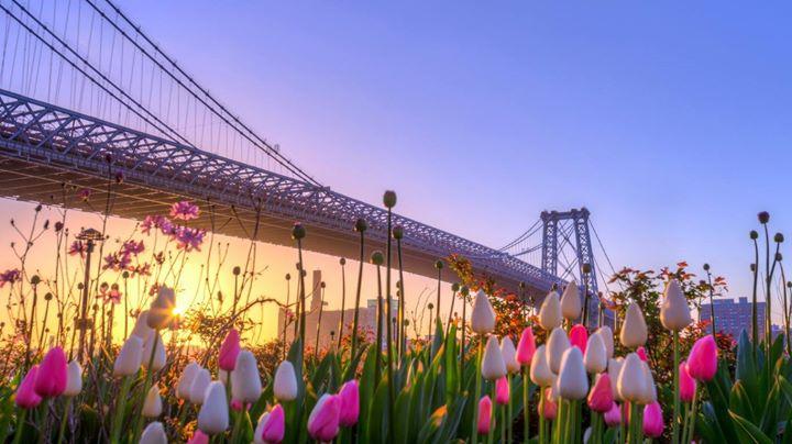Flowers In Staten Island