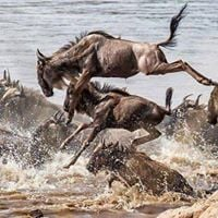 3 Days Maasai Mara Wildbeest Migration