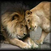 The Art of Loving. Transforming course