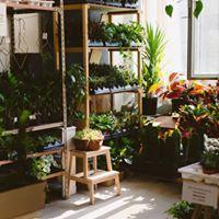 Grande vente de plantes tropicales