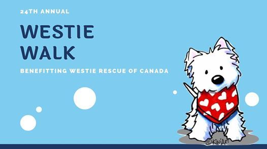 Vancouver Westie Walk at Lighthouse Park, West Vancouver