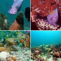 Saadiyat Reef &amp Breakwater (Zone 1)
