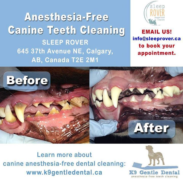 K9 Gentle Dental 1 for 2017