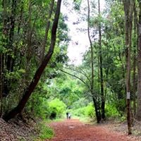 Yoga and Cycling At Karura Forest