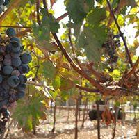 Wine &amp Dine Weine aus dem heiligen Land