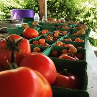 Taste of Tomato at Common Good City Farm
