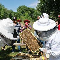 Honeybee Hive Inspections