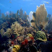 Key Largo Dive Weekend