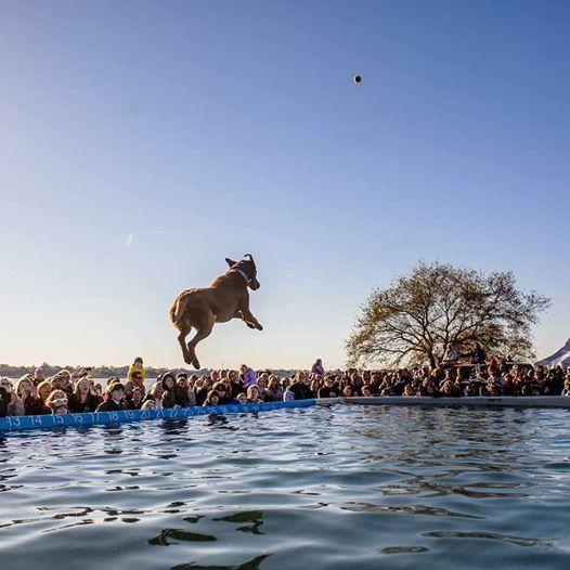 SEWE Dock Dogs