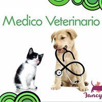 Check Ups Mdicos Gratis posterior al servicio de SPA Canino