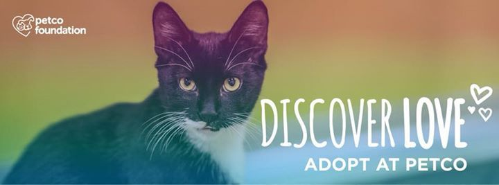 Cat dog adoption meet greet at petco cookeville tennessee m4hsunfo