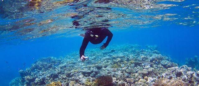 DreamTrips - Australian Rainforests & Reefs