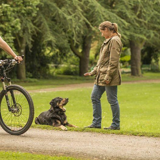 Hundefhrerschein Kurs & Prfung