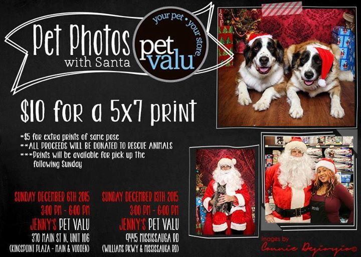 pet photos with santa at pet valu main and vodden brampton