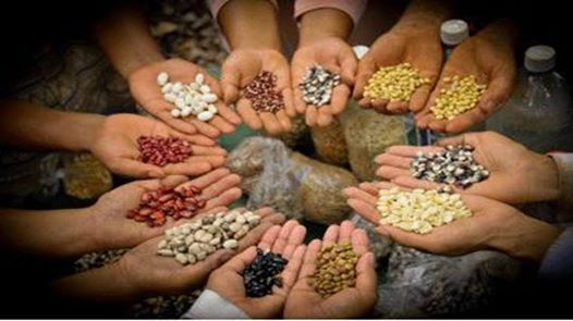 Preparing The Seeds of Possibilities