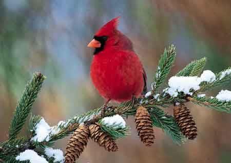 library book club fannie flaggs a redbird christmas at mark emily turner memorial library presque isle