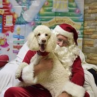 Christmas Party at Animal Antics