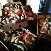 Townsville Mushrooms To Mushrooms Nov 4th