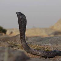 Reptile Walk