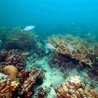 Saadiyat Reef &amp Blocks
