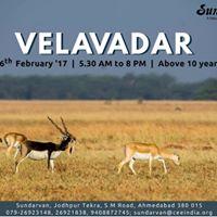 Trip to Velavadar