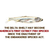 Rally  Meeting Oppose &quotMaximizing&quot Delta Exports