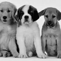 Puppy class - Classi per cuccioli 2-6 mesi