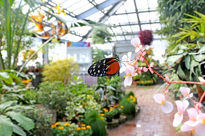 Butterflies in Bloom 2018 at Dow Gardens, Midland
