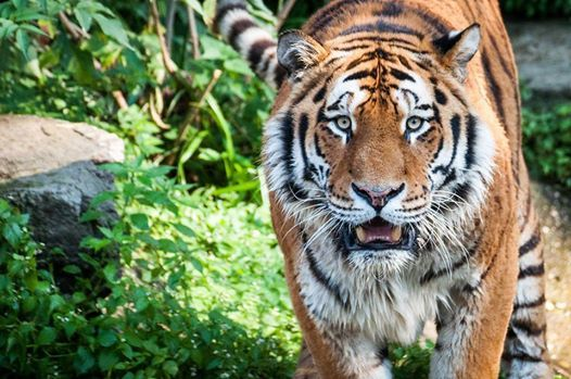Fotokurs Im Klner Zoo