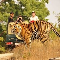 Inside the Tigers Fortress Tadoba