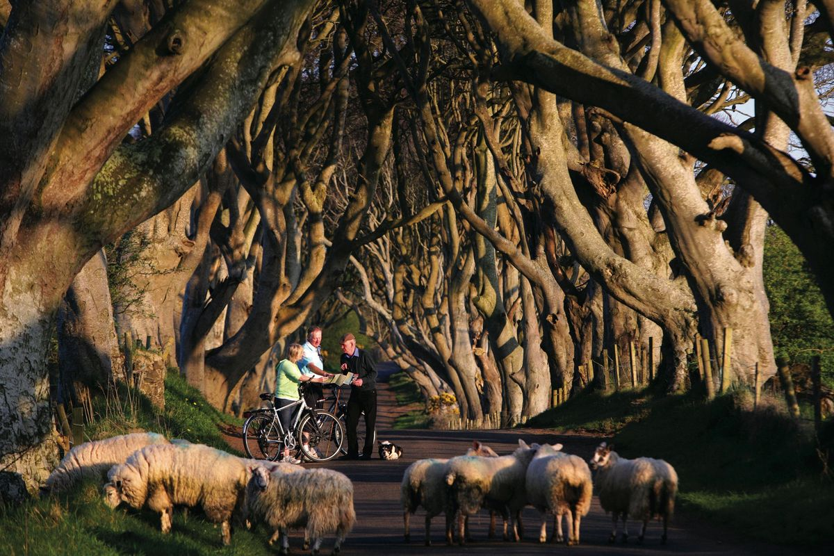 Game of Thrones Tour from Dublin Including Giants Causeway Nov18 - Feb 19