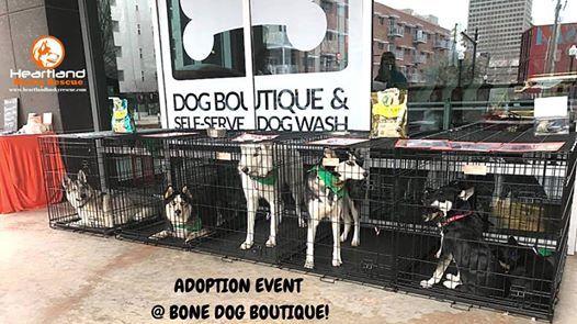 Heartland Husky Rescue Adoption Event At Bone Dog Boutique