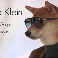 Casting Toutous avec lagence DogModel