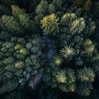 Samfunnsskogen - en kreativ workshop om mangfold