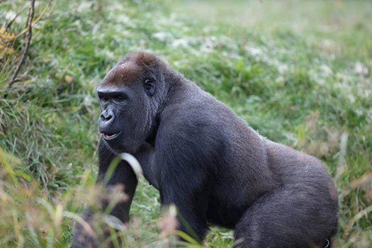 Wild Behaviour at Dublin Zoo