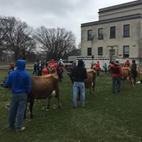 Dairy Judging Clinic