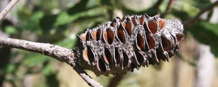 ffentliche Fhrung Pyrophyten