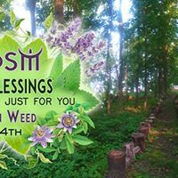 Green Blessings Herbal Medicine Just for you with Susan Wd