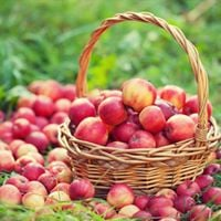Activit cole maison  La pomme