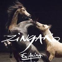 Spectacle Zingaro &quotEx Anima&quot