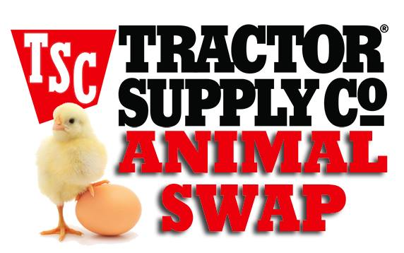 August TSC Clarion Animal Swap at Tractor Supply Co , Clarion
