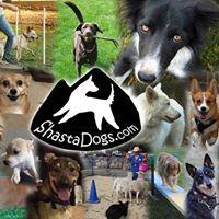 Shasta Dogs Training Walk