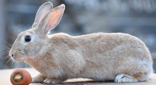 One Day Rabbit Farming Training Program